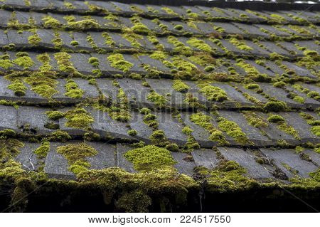 Roof cover with algae, moss, mold & lichen