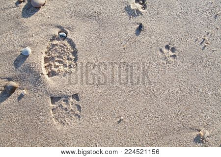 Dog walk on the beach. Sandy foot and paw print. Footprint evidence of dog walking left on the sand.