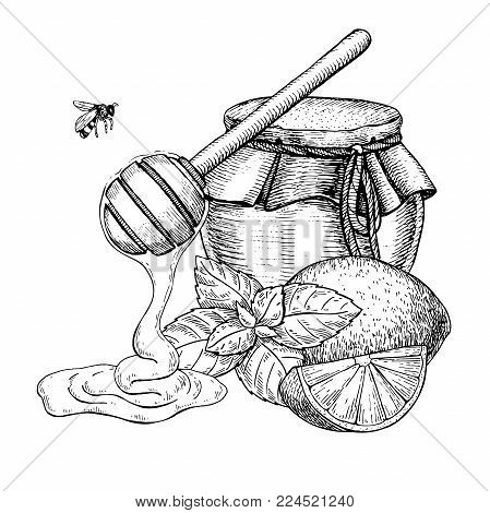 Honey with lemon and mint vector drawing. Jar, wooden spoon, honey drop, bee, hearb leaf and fruit slice sketch. Engraved illustration with tea ingredient, alternative medicine. Label, icon, packaging design.