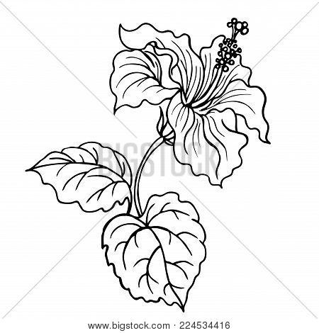 Hibiscus Flower Vector Photo Free Trial Bigstock
