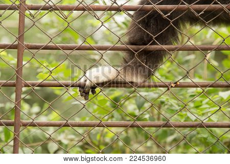 paw monkey in a cage at the zoo .