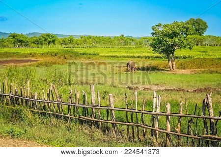 Wooden Fence On The Farm On The Indonesian Island Of Sumbawa, Indonesia