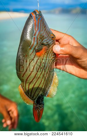 Colorful tropical fish caught om a fishing rod by a fisherman on the coast of Flores Nusa Teggara Island in Indonesia