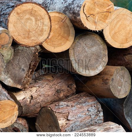A Pile of Felled Logs for Firewood