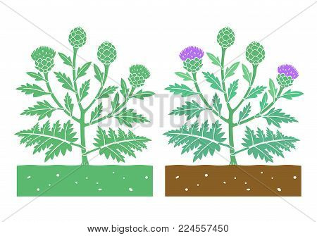 isolated artichoke plant with product vector illustration