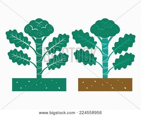 isolated broccoli plant with product vector illustration