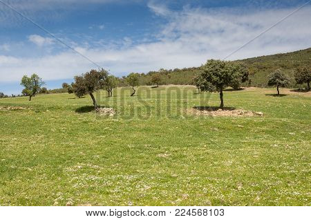 Mediterranean shrublands and flowering fallows in Toledo Mountains, Ciudad Real Province, Spain