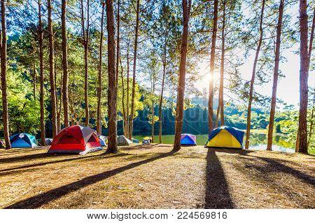 Camping Tents Under Pine Trees With Sunlight At Pang Ung Lake, Mae Hong Son In Thailand.