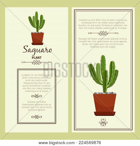 Greeting card with saguaro decorative plant, square frame. Vector illustration