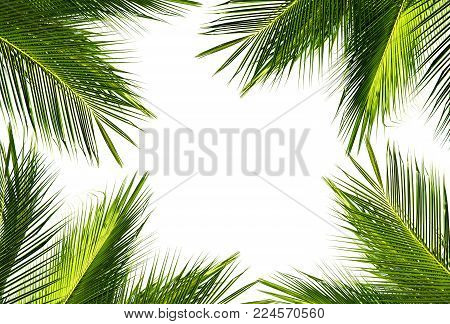 Natural Frame Of Green Coconut Palm Leaf On White Background And Text Copy Space. Using Idea Design