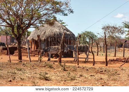 African house in the village and two donkeys