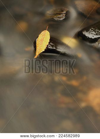 Orange beech leaf on dark slippery stone in cold water. Autumn colors.