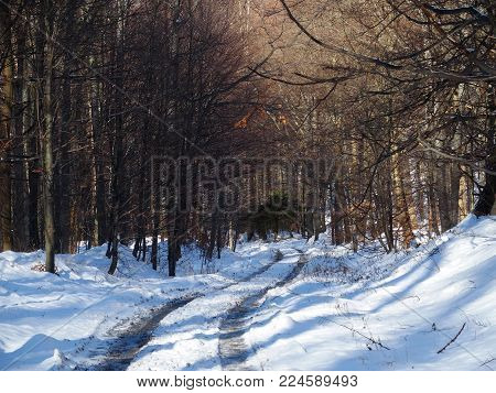 Path and traces in desolate wooden forest avenue with two rows of trees sides in Beskid Mountains near city of BIELSKO-BIALA at POLAND in 2016 cold and sunny winter day, Europe on December.