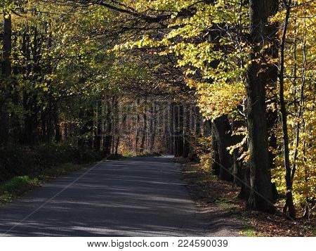 Road drive in desolate forest avenue landscape with two rows of trees sides near city of BIELSKO-BIALA in Poland in 2017 cold autumn sunny day, Europe on November.