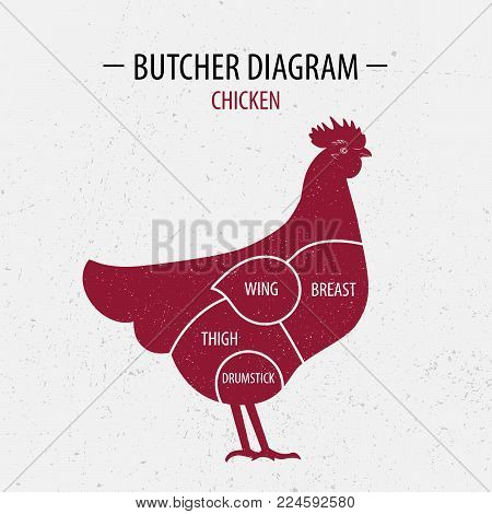 Cut of chicken. Poster Butcher diagram for groceries, meat stores, butcher shop, farmer market. Poster for meat related theme. Hen, rooster silhouette. Vector illustration.