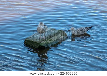 Seagull on a Rock and Seagull in the Water