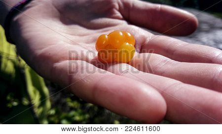 orange cloudberry laying on human hand closeup view