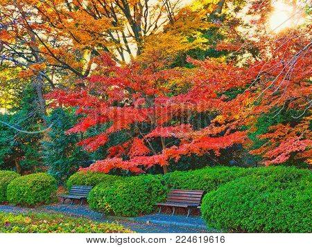 Bright, quiet inner city park relaxation area with benches. Two wooden benches in an inner city park surrounded by bright green, red and yellow foliage. A nice image of a relaxing time out spot.