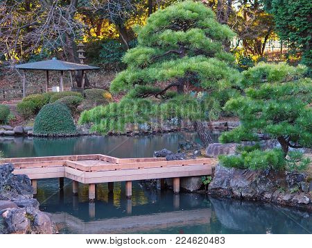 Japanese water garden in Tokyo Japan featuring traditional wooden walking bridge with reflection, bonsai like pine trees, select stones, pagoda shaped canopy and late afternoon sun lighting the background.