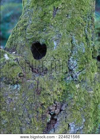 Natural heart shape found on a green mossy tree. Can also be used as a background for Valentine's Day, or other messages related to love, love of nature, love for the environment, or any loving and caring.