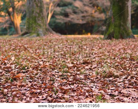 Natural dry forest floor foliage and colors. Dry leaves on grass for use as a winter, autumn fall park or nature forest background. Focus is on the foreground, background is bokeh in case of use with text or design. In landscape orientation poster