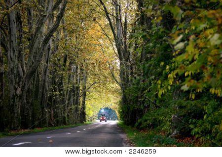 Fall Trees Tun