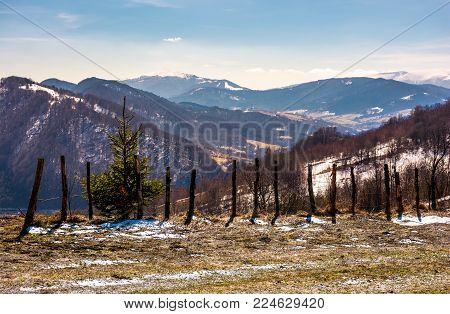 spruce tree near the fence on a hillside in springtime. beautiful landscape with grassy weathered slopes and some snow in mountains