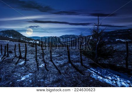 spruce tree on a hillside in springtime at night in full moon light. beautiful landscape with grassy weathered slopes and some snow in mountains
