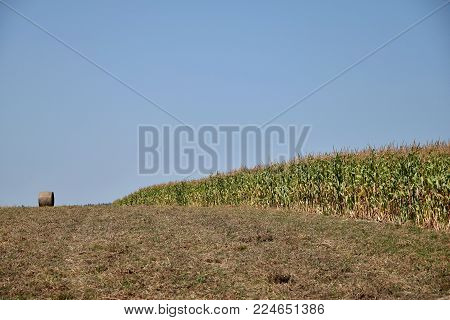 Fields of corn and round bale of straw