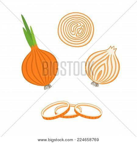 Whole bulb onion, half and onion rings. Vector illustration in flat style isolated on white background