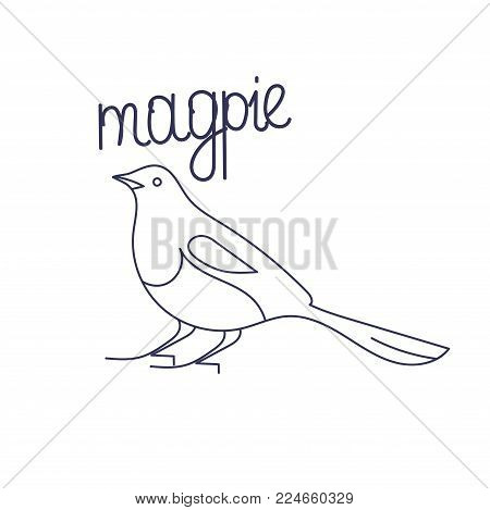 Asian or Oriental Magpie, line art or outline vector illustration. Korean magpie.