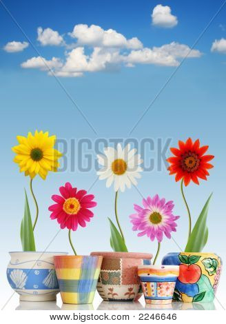 Fun Daisies In Pots