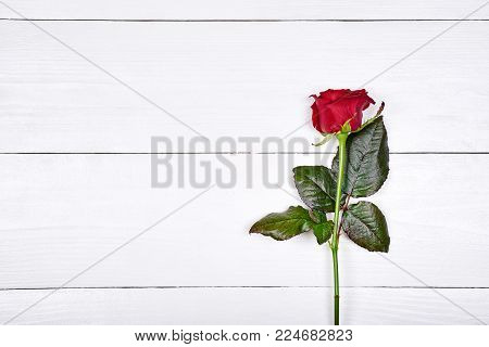Beautiful one red rose on white wooden background, copy space. Greeting card for International Womens Day, March 8, Mothers Day, Valentines Day, wedding, birthday, close up