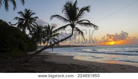 Sunset, paradise beach and palm tree, Martinique island, French West Indies.