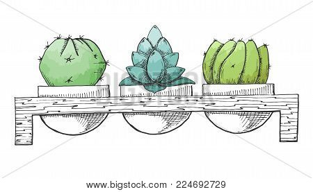 Sketch Three Succulents In Pots On A Wooden Stand. Stylized Watercolor. Vector Illustration.