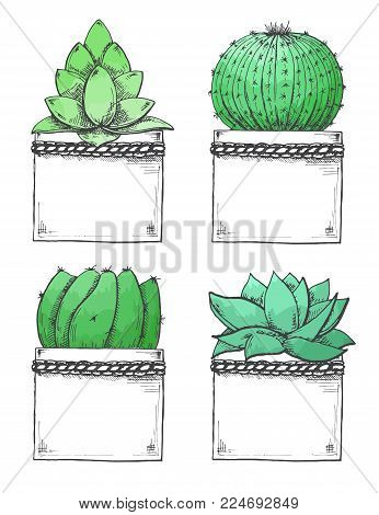 Sketch of succulents in pots. Stylized watercolor. Vector illustration