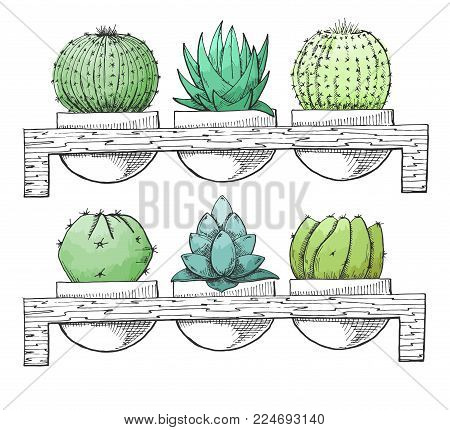 Sketch succulents in pots on a wooden stand. Stylized watercolor. Vector illustration.