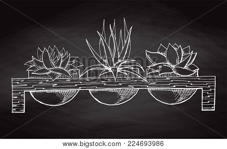 Sketch three succulents in pots on a wooden stand isolated on the chalkboard. Vector illustration.