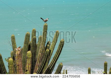 Mandacarus and a bird near the shore