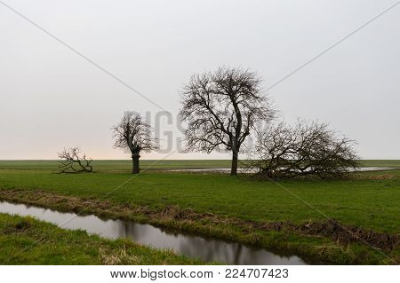 Three trees sorted by size break the horizon in endless grassland of a polder landscape