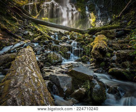 Fallen Log in Proxy Falls in Oregon Wilderness