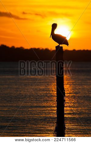 Silhouette of an isolated pelican sitting on a piling in Destin Harbor, Florida at sunset.