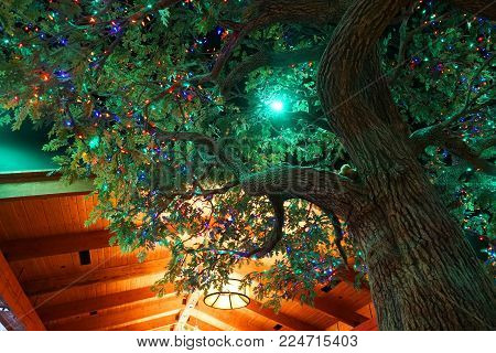 Low Angle View Of Tree Decorated With Colorful Light Indoors