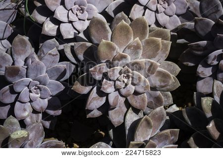 Group of succulents and cactus growing, stock photo