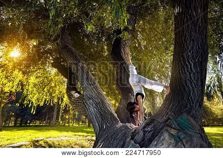 Yoga On The Tree