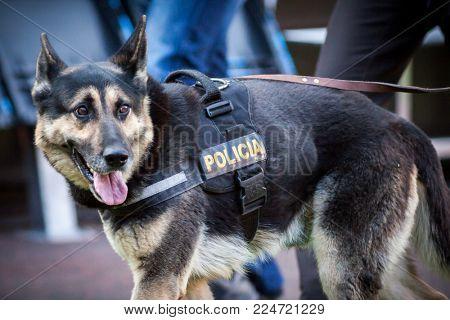 VALENCIA, SPAIN - JANUARY 27: Police dog during Spanish La Liga match between Valencia CF and Real Madrid at Mestalla Stadium on January 27, 2018 in Valencia, Spain