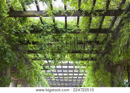 WROCLAW, POLAND - JUNE 13, 2017 : Green pergola in Szczytnicki Park. There is Centennial Hall and Multimedia Fountain in the park