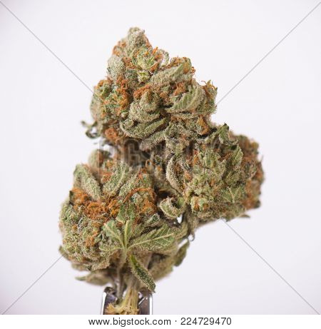 Detail of dried cannabis bud (sour tangie strain) isolated over white background