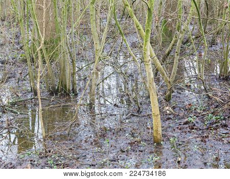 Flooded Forest Area As A Natural And Recurring Seasonal Occurrence