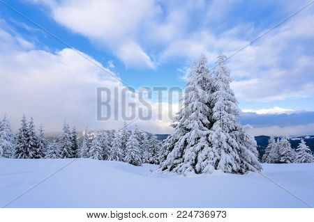 On a frosty beautiful day among high mountains and peaks are magical trees covered with white fluffy snow against the magical winter landscape. Fantastic winter scenery.